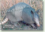 Nuisance Wildlife Removal Wildlife Index - Armadillos