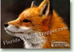 Nuisance Wildlife Removal Wildlife Index - Foxes